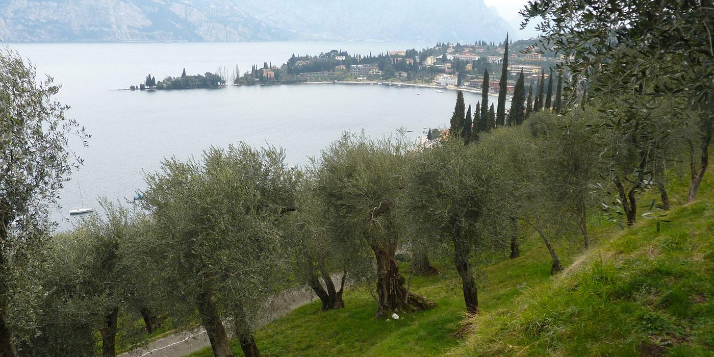 Consorzio olivicoltori di Olio d'oliva a Malcesine