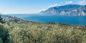 Consorzio Olivicoltori Malcesine Lago di Garda